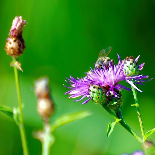 Foto com uma flor lilás em uma área verde durante o dia. Há um inseto no centro dela. Ao lado, há dois botões de flores.