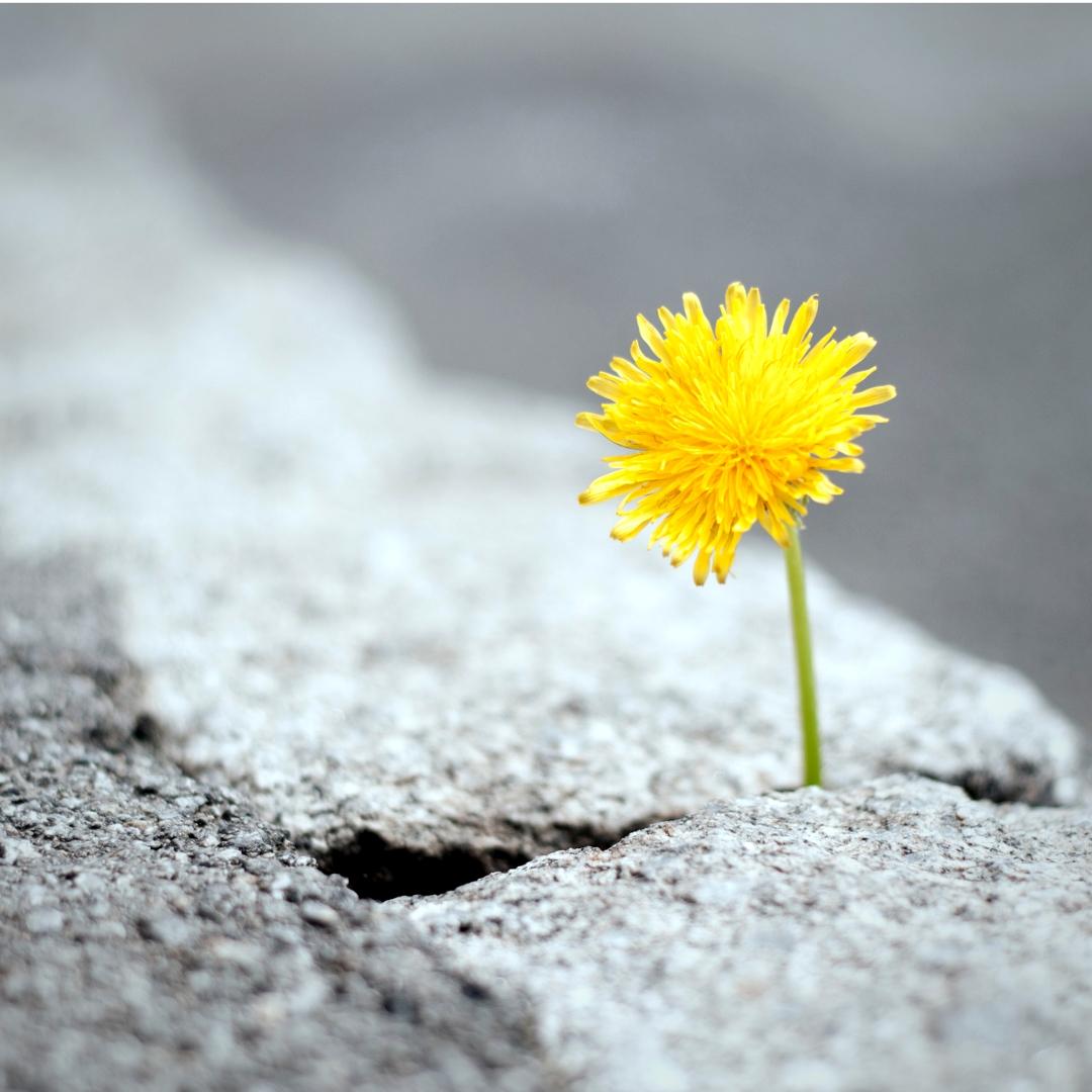 O que é empoderamento e por onde começar?